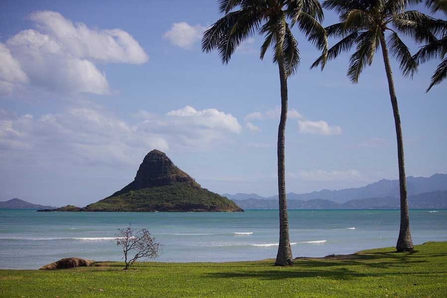Picture of Palm Trees in Hawaii with the ocean in the background